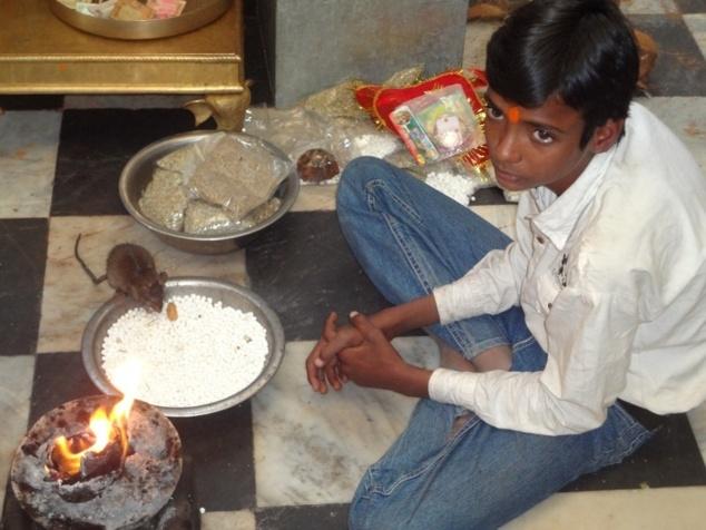 Un Khabâ se régale des offrandes déposées au pied de l'autel.
