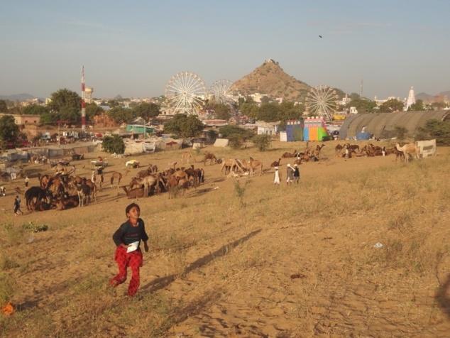 La grande foire aux chameaux de Pushkar. Tandis que les tractations vont bon train, on s'étourdit aussi sur les ménages de la fête foraine.