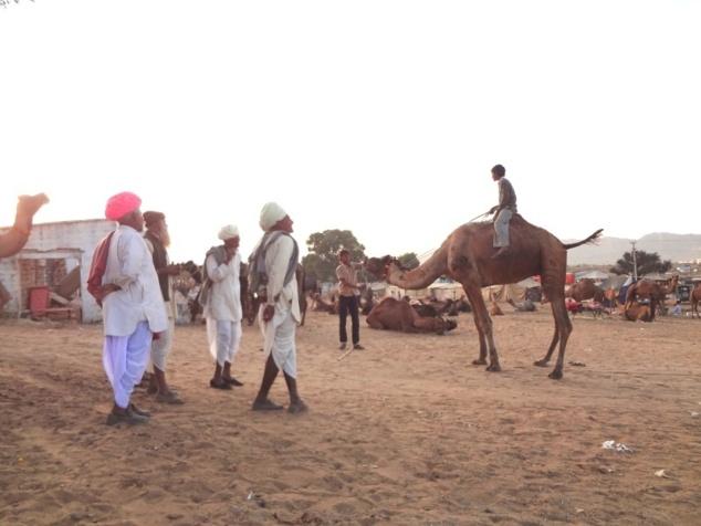Regards d'experts sur un chameau monté à cru par un jeune garçon.