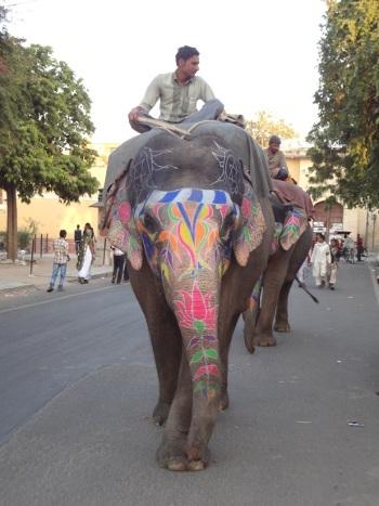 On peut voir des éléphants à Jaipur. Ils étaient nombreux à l'époque du royaume. Ils participent encore aux grandes cérémonies et le reste du temps ils promènent les touristes.