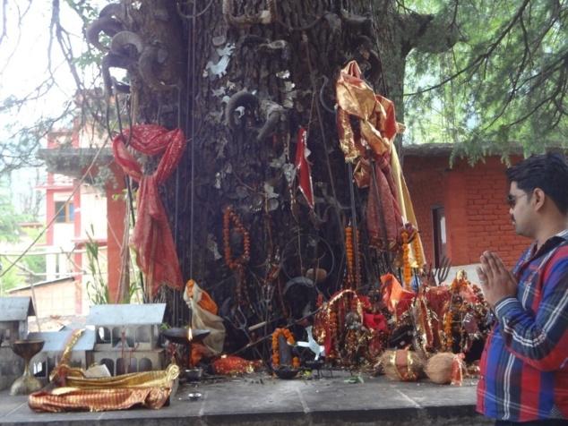 Petit autel au pied d'un arbre dédié à Ghatotkacha, le fils d'Hadimbâ. Celui qui est présenté dans le Mahâbhâratâ comme un valeureux guerrier, est censé protéger de nos jours les nouvelles constructions. D'où les maquettes de maisons déposés sur la plateforme