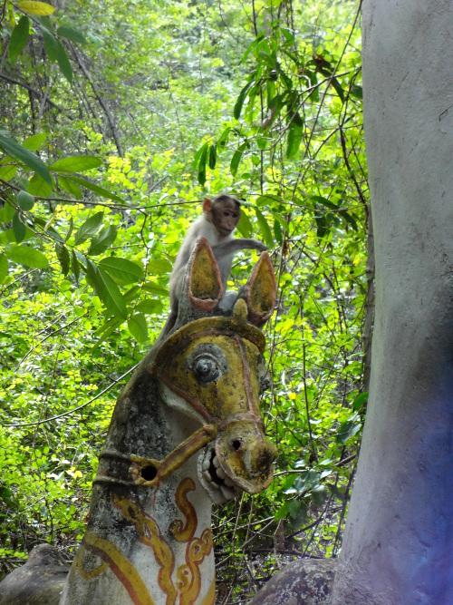 Un petit singe facétieux sur la monture d'Aiyanaar.