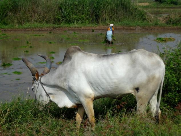 En quittant le Tamil Nadu, nous traversons des paysages verdoyants.