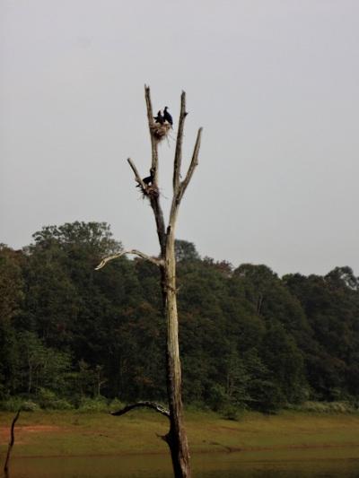 Les oiseaux sont nombreux et à l'abri des prédateurs perchés sur les arbres au milieu de l'eau.