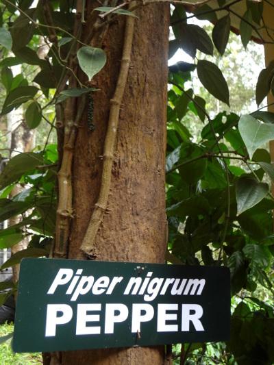 Après la réserve, visite d'une plantation.