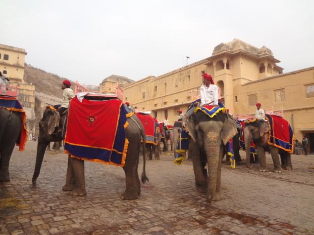 Les éléphants s'avancent pour embarquer des touristes et entamer la montée.