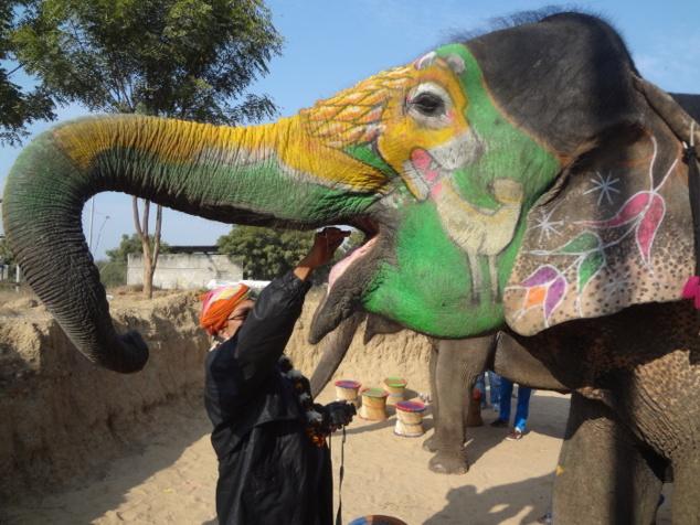 Pour que les éléphants s'habituent à nous, à notre odeur, nous commençons par les nourrir. Les éléphants adorent les bananes, c'est leur friandise préférée.