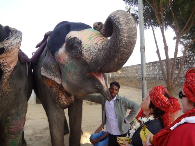 Il faut poser délicatement la banane sur la langue de l'éléphant.