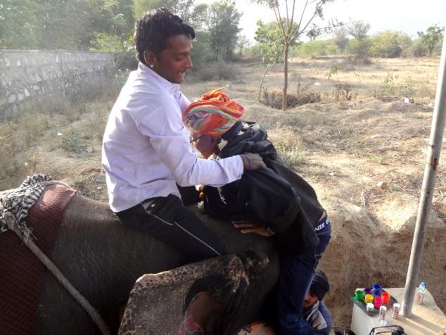 ... l'éléphant a cru bon de replier sa trompe. Jean s'est alors retrouvé suspendu dans le vide. Mais tout s'est bien terminé. Pour les moins téméraires, l'éléphant peut se coucher. Ainsi c'est beaucoup plus facile pour monter sur son dos.