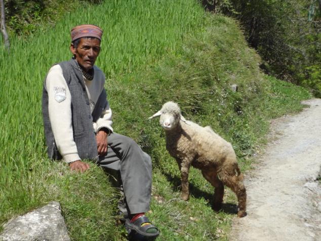 Berger et son mouton, qui prend la pause lui aussi