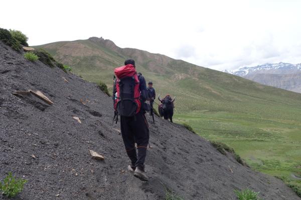 Rencontre avec des yaks au détour d'un sentier