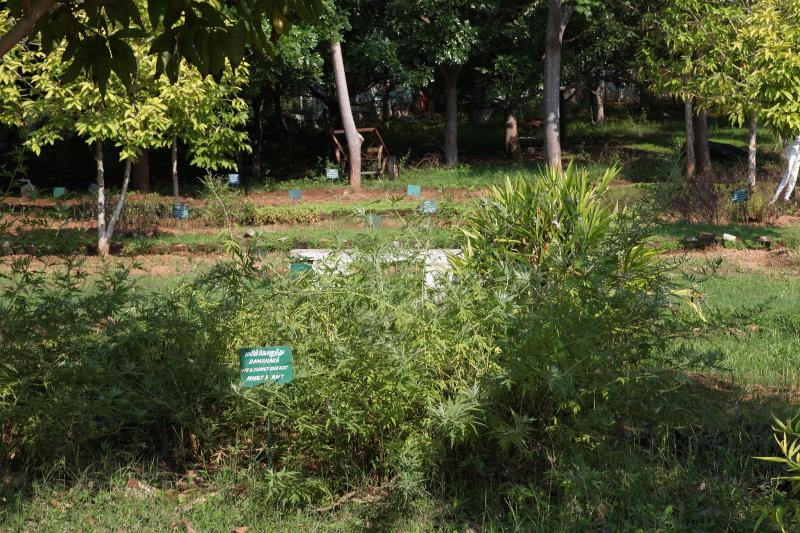 Le jardin potager du centre