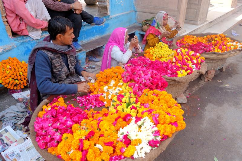 Ces fleurs servent à confectionner des guirlandes pour les dieux et serviront aussi d'offrandes pour honorer le lac
