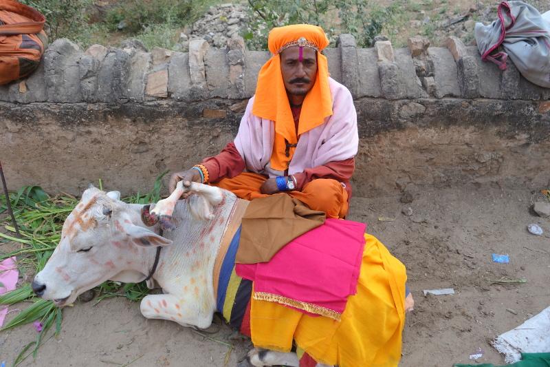 La vache est sacrée en Inde. Elle l'est encore plus lorsqu'elle a cinq pattes ! L'anormalité est vue ici comme un miracle, comme une bénédiction des dieux