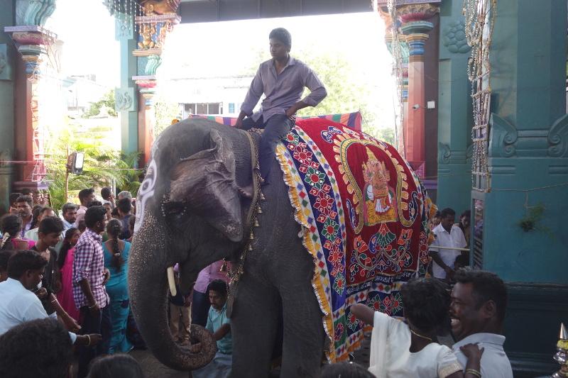 Au coeur de Pondichéry, un haut lieu de la religions hindoue: un grand temple est dédié au dieu à tête d'éléphant Ganesh. A l'entrée de ce temple, un éléphant bénit les dévots.