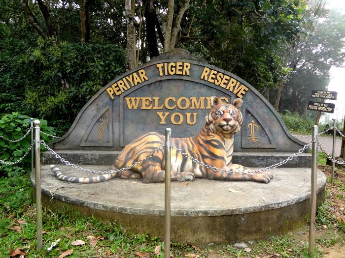 Visite d'une réserve à Periyar dans laquelle il reste moins d'une dizaine de tigres.