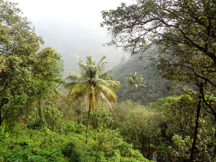 Sur les ghâts où la pluie tombe en abondance, la végétation est exhubérante.