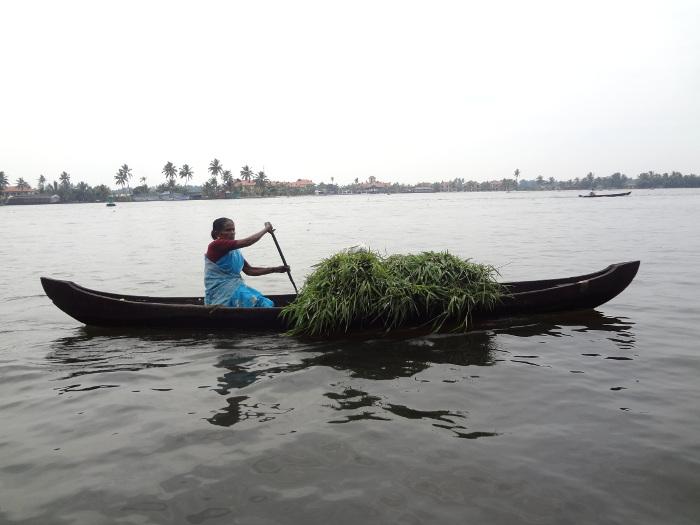 Une femme transporte du fourrage dans sa pirogue.