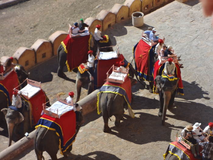 Les éléphants qui montent et descendent sans discontinuité forment une véritable noria pour acheminer au sommet le flot des touristes.