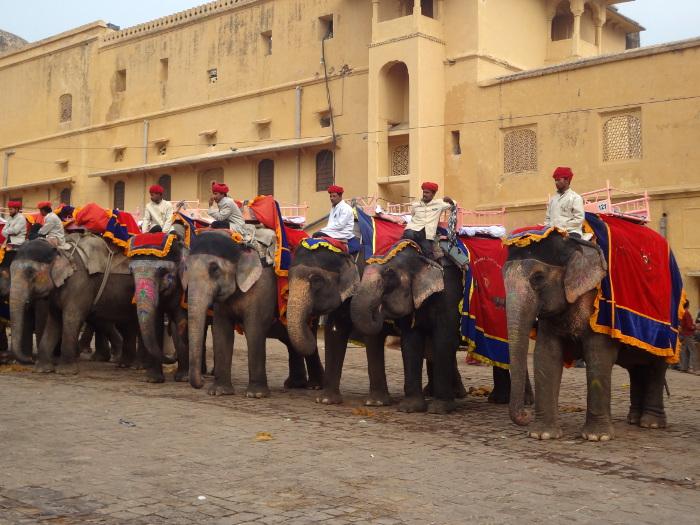 Les éléphants se rangent côte à côté en attendant leur tour.