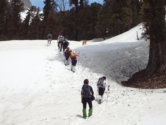 Randos au coeur de l'Himachal Pradesh  - avril 2014 - 1