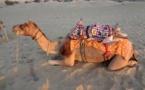Circuit Rajasthan : récit et photos (2)