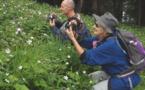 Que de fleurs dans l'Himalaya !